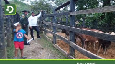 Photo of ¿Quién responde? Dueño de la vaca que causó estragos en San Luis, manifestó que la vendió ese mismo día